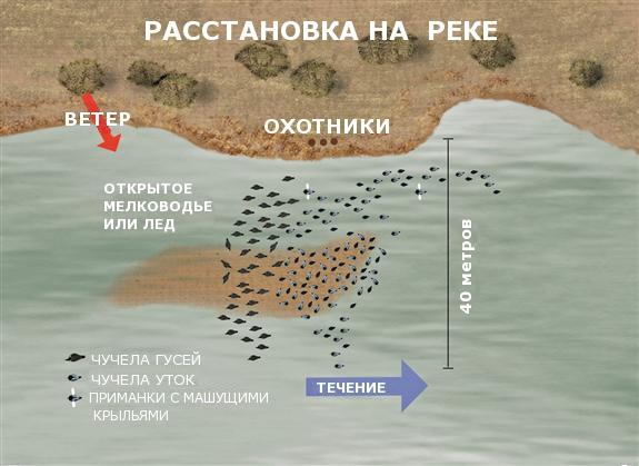 Гуси и утки на реках.